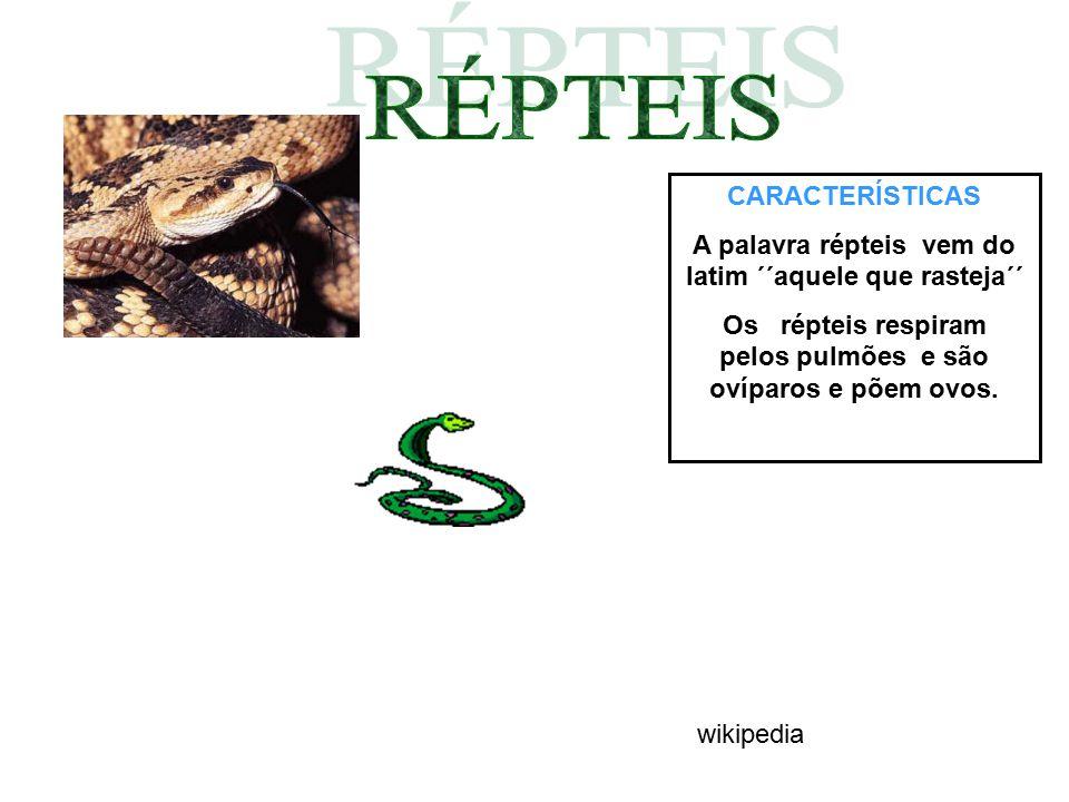 CARACTERÍSTICAS A palavra répteis vem do latim ´´aquele que rasteja´´ Os répteis respiram pelos pulmões e são ovíparos e põem ovos. wikipedia