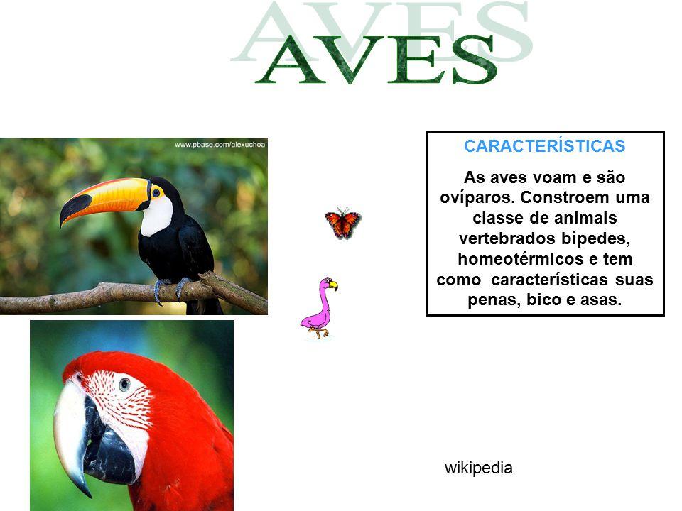 CARACTERÍSTICAS As aves voam e são ovíparos. Constroem uma classe de animais vertebrados bípedes, homeotérmicos e tem como características suas penas,