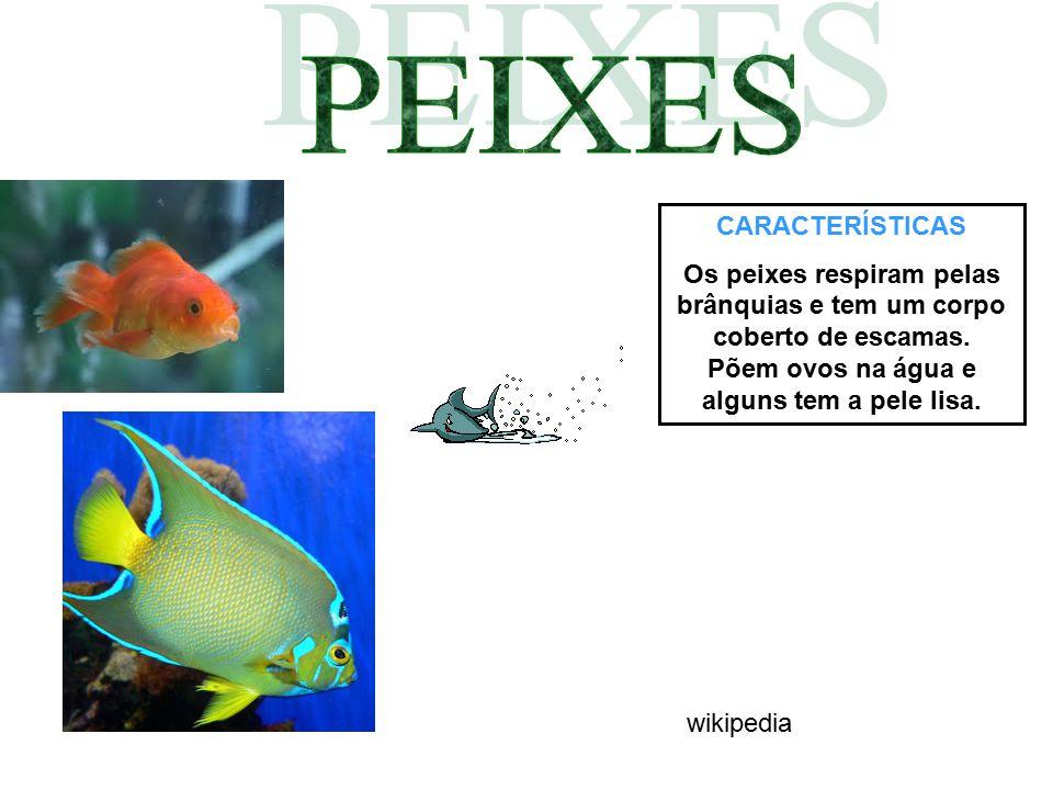 CARACTERÍSTICAS Os peixes respiram pelas brânquias e tem um corpo coberto de escamas. Põem ovos na água e alguns tem a pele lisa. wikipedia
