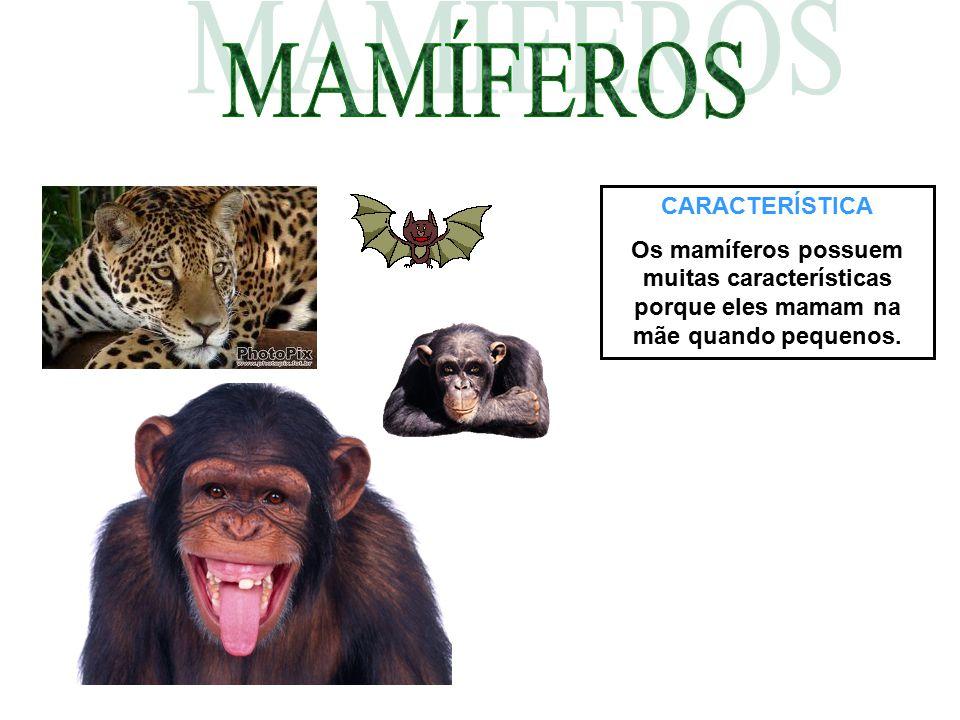 CARACTERÍSTICA Os mamíferos possuem muitas características porque eles mamam na mãe quando pequenos.
