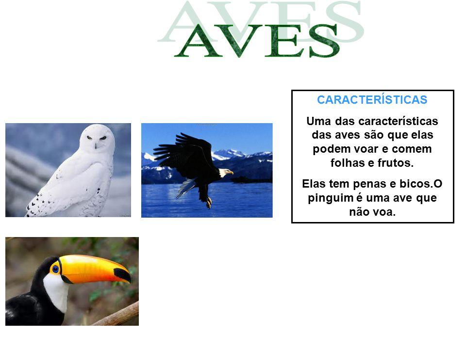 CARACTERÍSTICAS Uma das características das aves são que elas podem voar e comem folhas e frutos. Elas tem penas e bicos.O pinguim é uma ave que não v