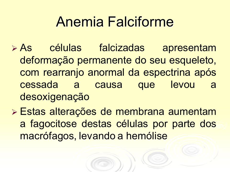 Anemia Falciforme   As células falcizadas apresentam deformação permanente do seu esqueleto, com rearranjo anormal da espectrina após cessada a causa que levou a desoxigenação   Estas alterações de membrana aumentam a fagocitose destas células por parte dos macrófagos, levando a hemólise