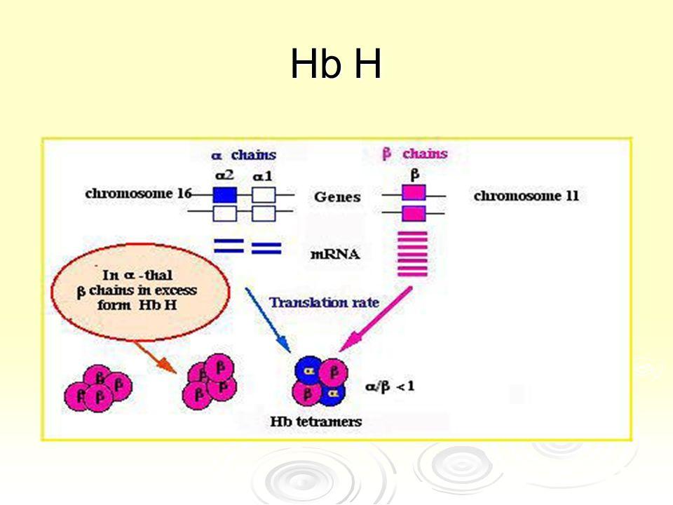 Hb H.