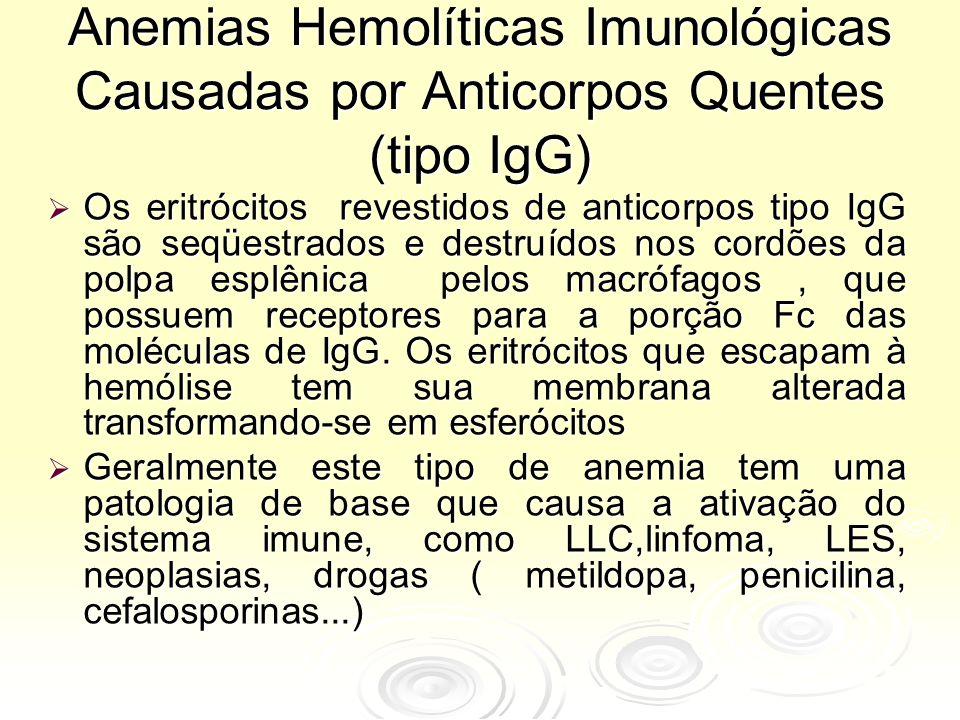 Anemias Hemolíticas Imunológicas Causadas por Anticorpos Quentes (tipo IgG)  Os eritrócitos revestidos de anticorpos tipo IgG são seqüestrados e destruídos nos cordões da polpa esplênica pelos macrófagos, que possuem receptores para a porção Fc das moléculas de IgG.