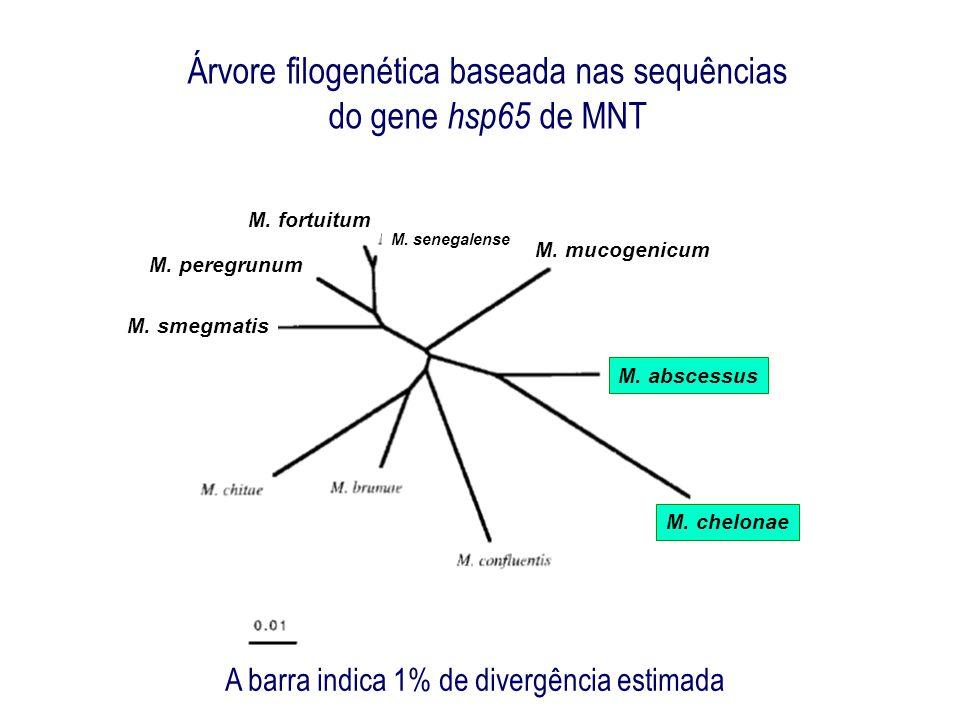 Micobactérias Atípicas e Saúde Pública Diagnóstico Laboratorial Identificação molecular por PRA- hsp65 Produto da PCR hsp 65 submetido à digestão enzimática Telenti et.
