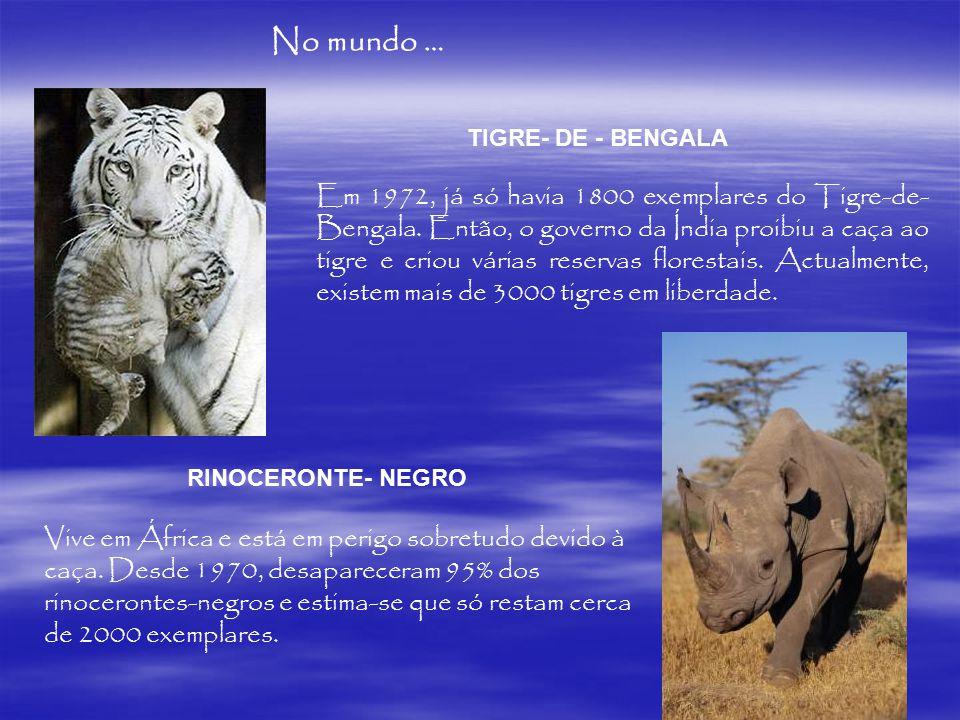 No mundo… TIGRE- DE - BENGALA Em 1972, já só havia 1800 exemplares do Tigre-de- Bengala. Então, o governo da Índia proibiu a caça ao tigre e criou vár