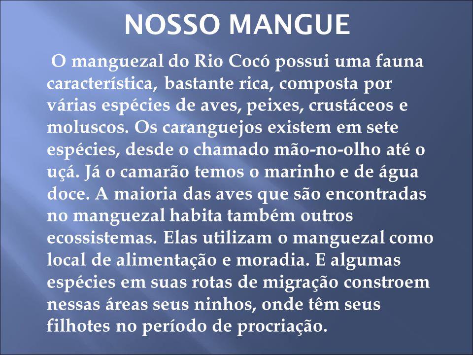 NOSSO MANGUE O manguezal do Rio Cocó possui uma fauna característica, bastante rica, composta por várias espécies de aves, peixes, crustáceos e molusc