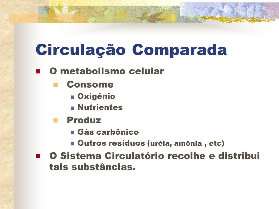 Circulação Comparada O metabolismo celular Consome Oxigênio Nutrientes Produz Gás carbônico Outros resíduos ( uréia, amônia, etc ) O Sistema Circulató