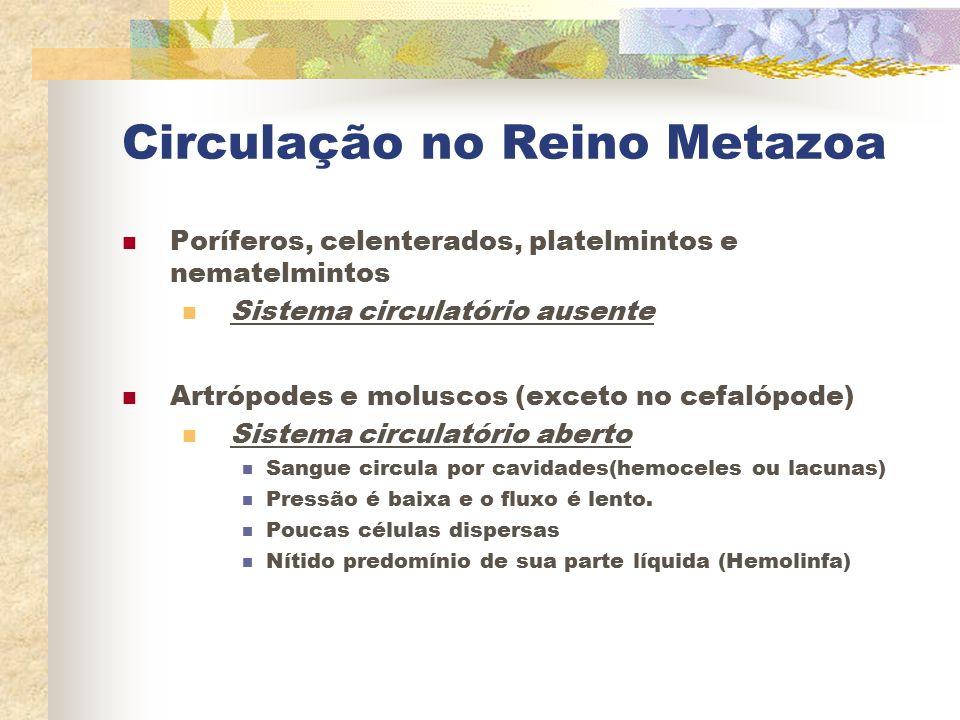 Circulação no Reino Metazoa Poríferos, celenterados, platelmintos e nematelmintos Sistema circulatório ausente Artrópodes e moluscos (exceto no cefaló
