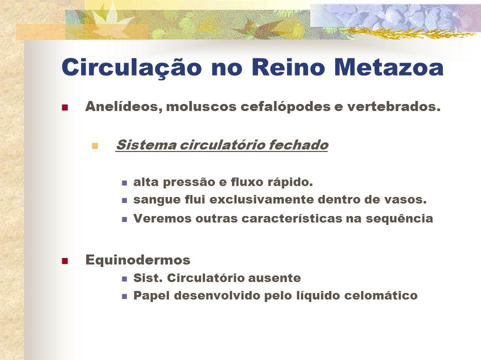 Circulação no Reino Metazoa Anelídeos, moluscos cefalópodes e vertebrados. Sistema circulatório fechado alta pressão e fluxo rápido. sangue flui exclu