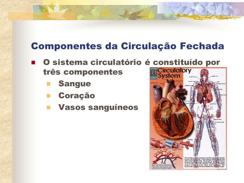 Componentes da Circulação Fechada O sistema circulatório é constituído por três componentes Sangue Coração Vasos sanguíneos
