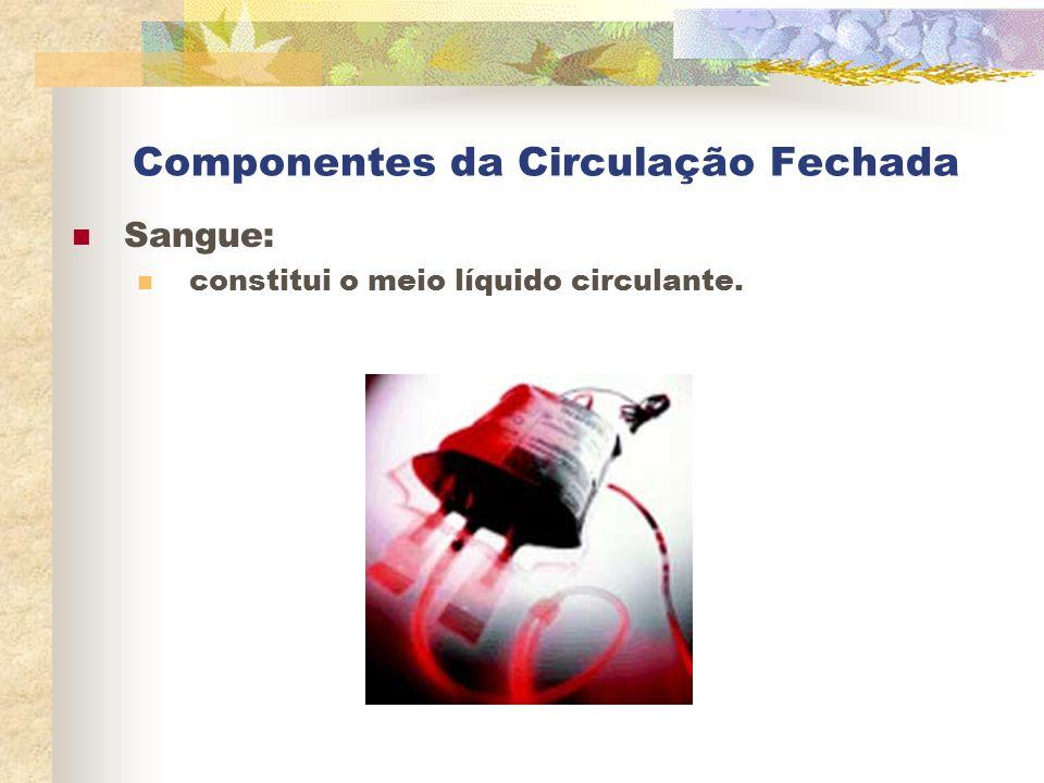 Componentes da Circulação Fechada Sangue: constitui o meio líquido circulante.