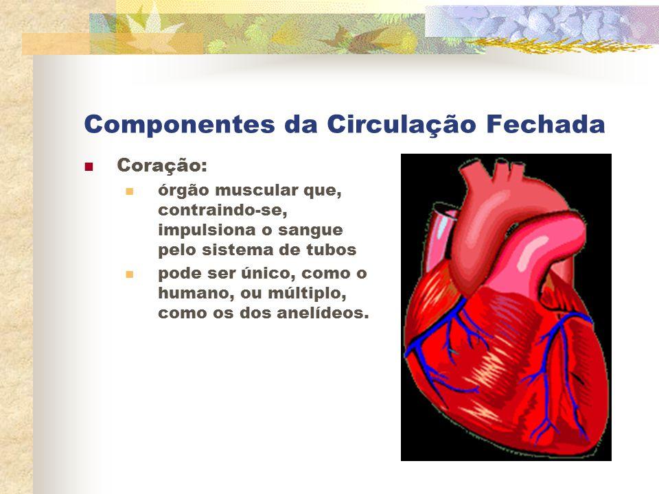 Componentes da Circulação Fechada Coração: órgão muscular que, contraindo-se, impulsiona o sangue pelo sistema de tubos pode ser único, como o humano,
