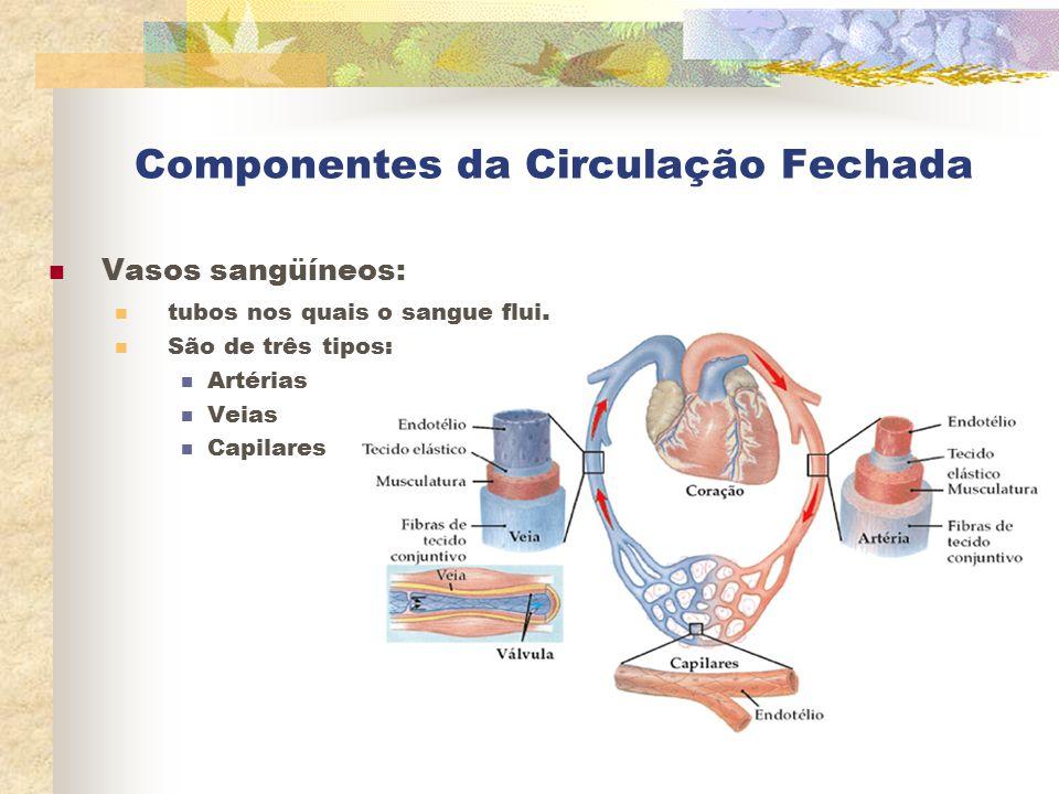 Componentes da Circulação Fechada Vasos sangüíneos: tubos nos quais o sangue flui. São de três tipos: Artérias Veias Capilares