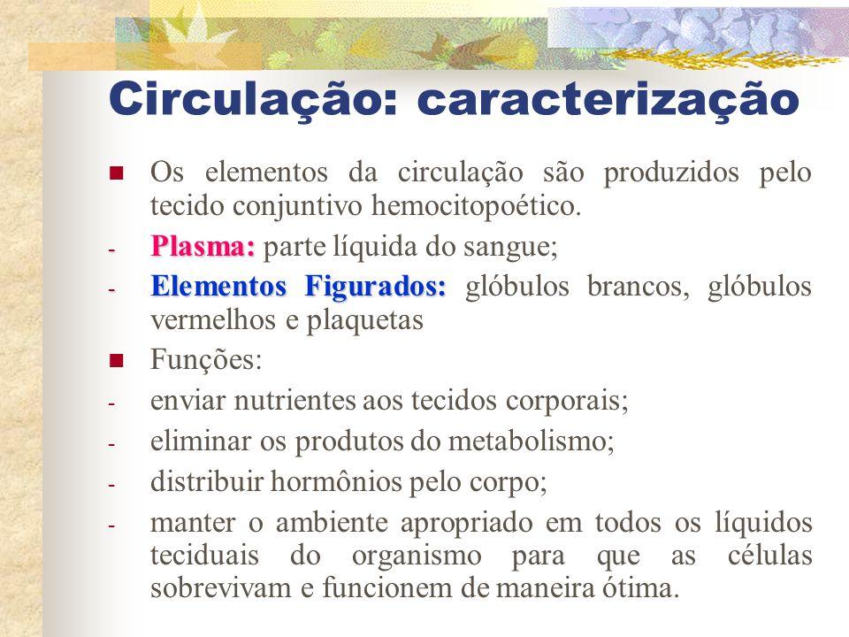 Circulação: caracterização Os elementos da circulação são produzidos pelo tecido conjuntivo hemocitopoético. - Plasma: - Plasma: parte líquida do sang
