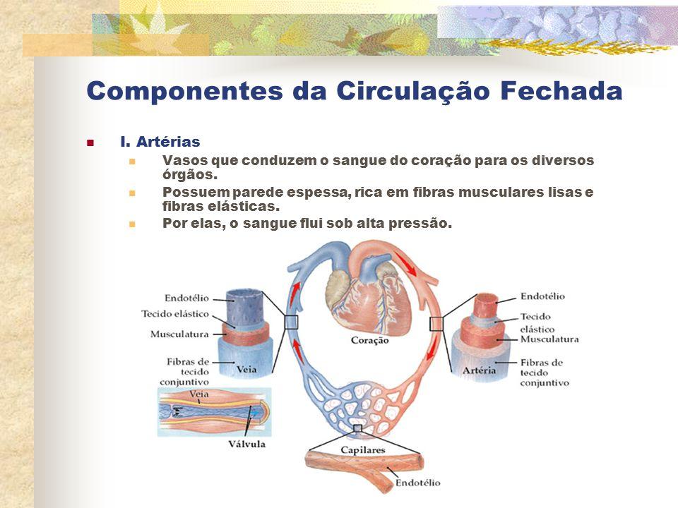 Componentes da Circulação Fechada I. Artérias Vasos que conduzem o sangue do coração para os diversos órgãos. Possuem parede espessa, rica em fibras m