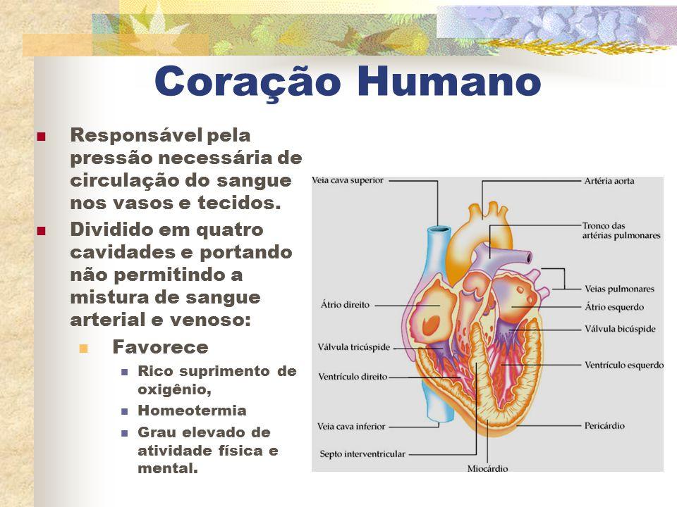 Coração Humano Responsável pela pressão necessária de circulação do sangue nos vasos e tecidos. Dividido em quatro cavidades e portando não permitindo