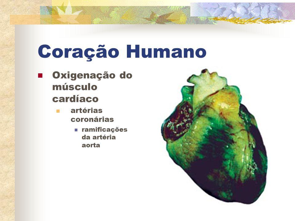 Coração Humano Oxigenação do músculo cardíaco artérias coronárias ramificações da artéria aorta