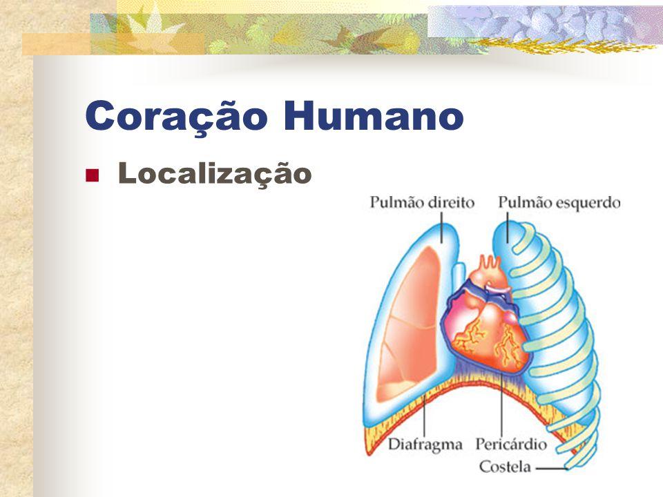 Coração Humano Localização