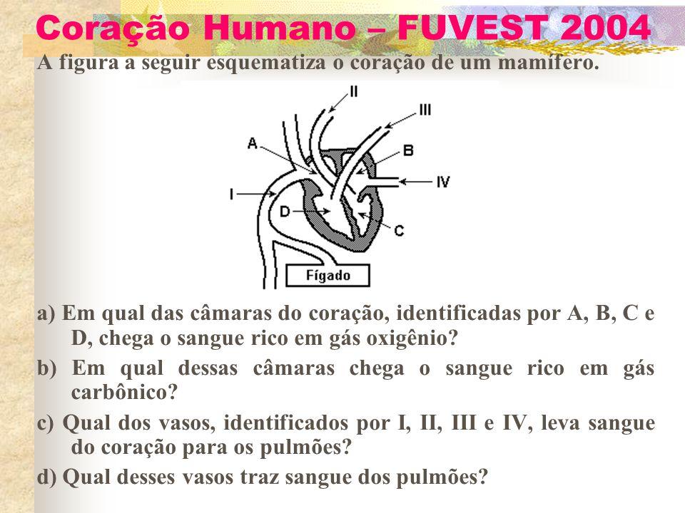 Coração Humano – FUVEST 2004 A figura a seguir esquematiza o coração de um mamífero. a) Em qual das câmaras do coração, identificadas por A, B, C e D,