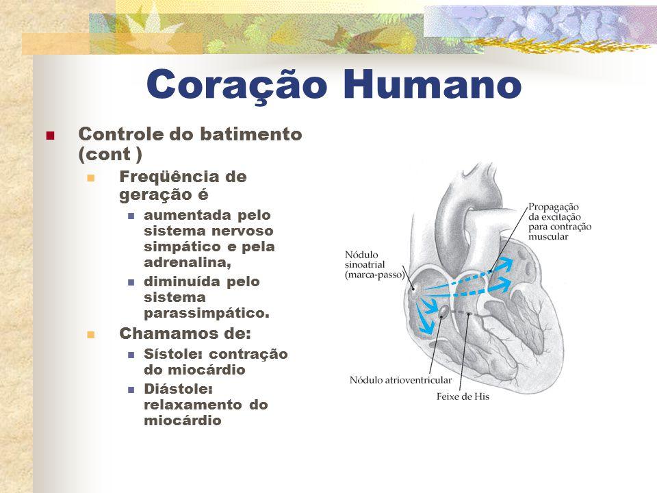 Coração Humano Controle do batimento (cont ) Freqüência de geração é aumentada pelo sistema nervoso simpático e pela adrenalina, diminuída pelo sistem