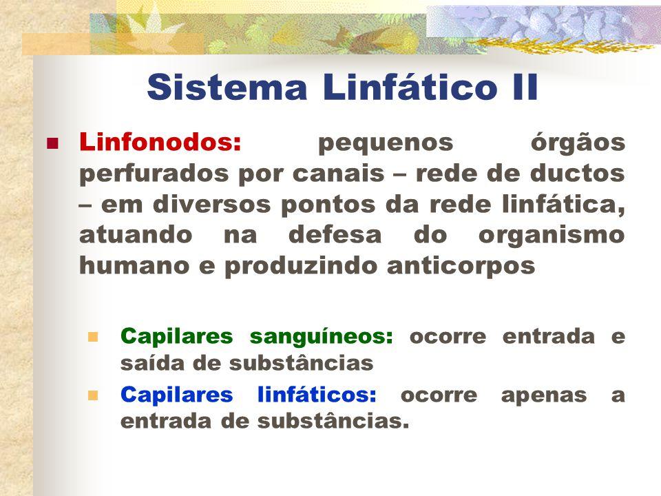 Sistema Linfático II Linfonodos: pequenos órgãos perfurados por canais – rede de ductos – em diversos pontos da rede linfática, atuando na defesa do o