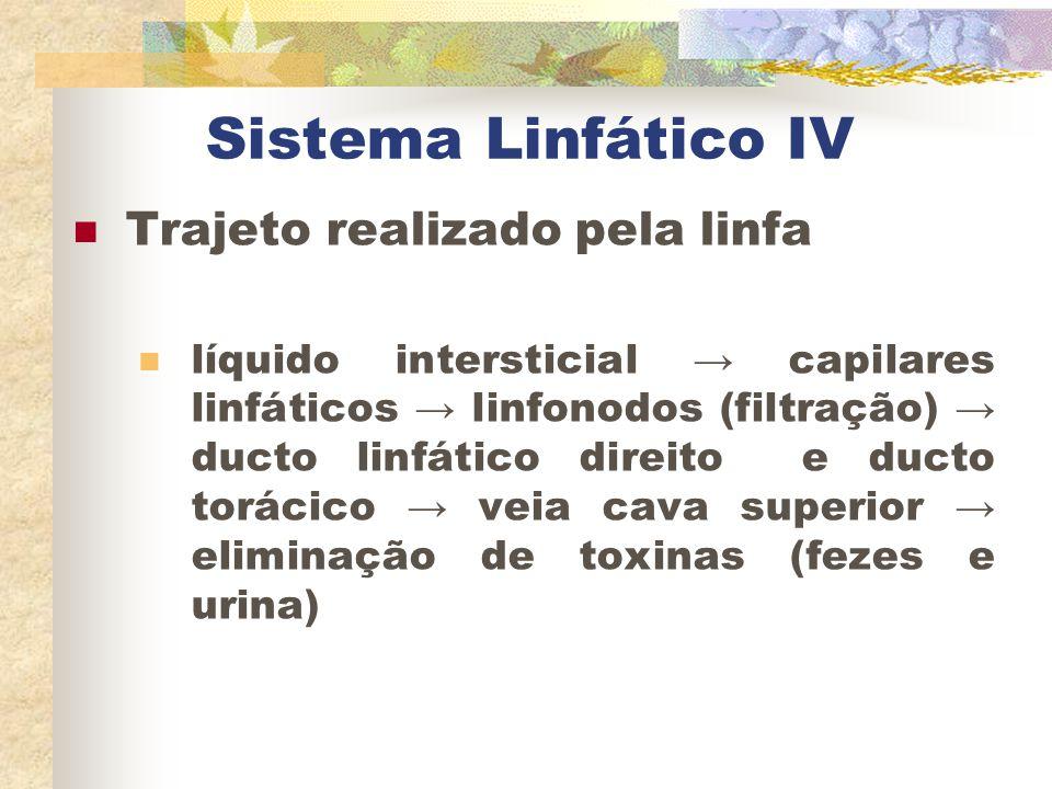 Sistema Linfático IV Trajeto realizado pela linfa líquido intersticial → capilares linfáticos → linfonodos (filtração) → ducto linfático direito e duc