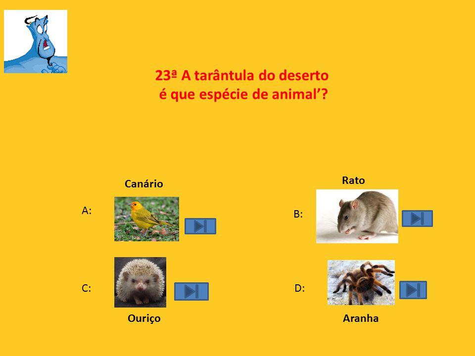 22ª Qual o camelo mais gordo da imagem?