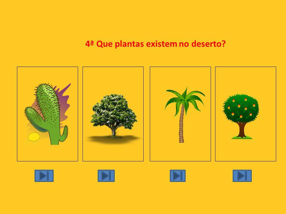 4ª Que plantas existem no deserto?