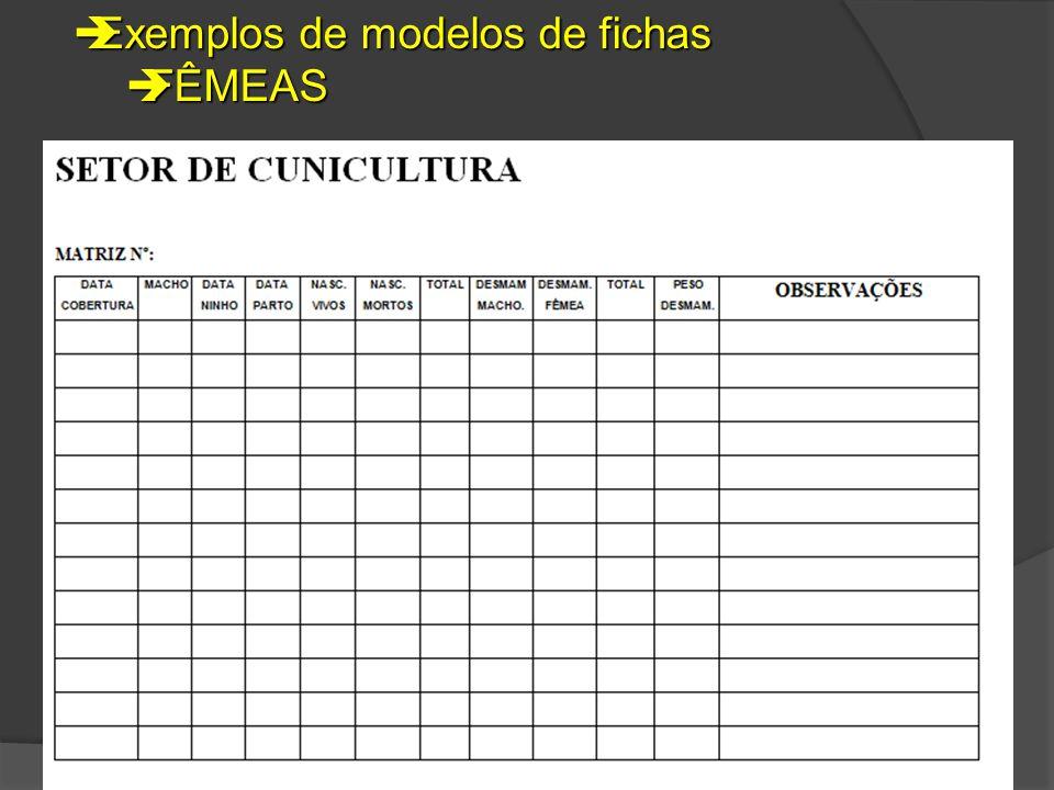  Exemplos de modelos de fichas  FÊMEAS