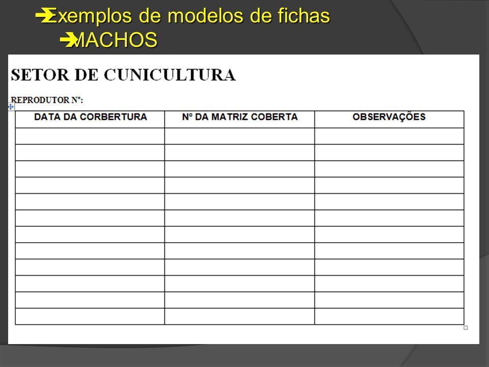  Exemplos de modelos de fichas  MACHOS