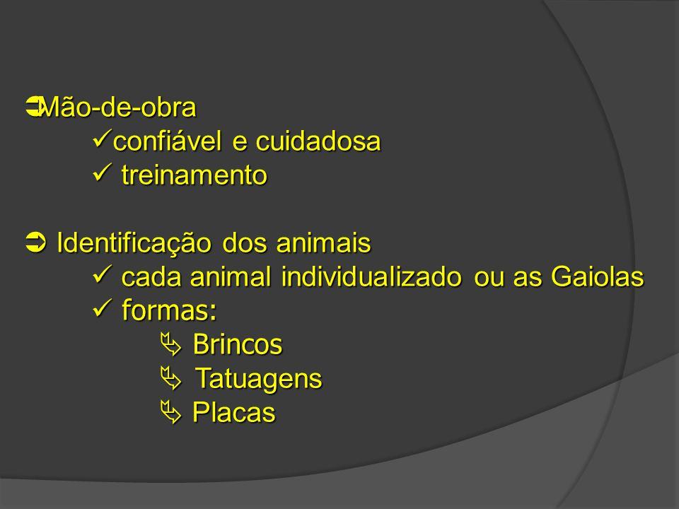  Mão-de-obra confiável e cuidadosa treinamento  Identificação dos animais cada animal individualizado ou as Gaiolas formas: formas:  Brincos  Tatu
