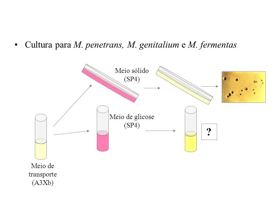 Cultura para M. penetrans, M. genitalium e M. fermentas Meio de transporte (A3Xb) Meio de glicose (SP4) Meio sólido (SP4) ?