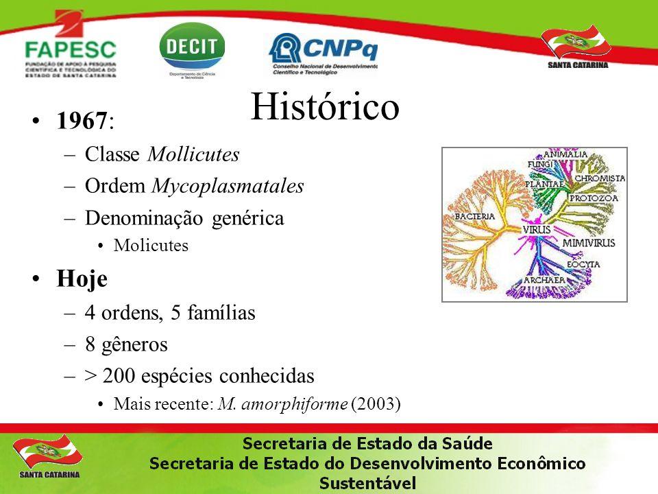 Histórico 1967: –Classe Mollicutes –Ordem Mycoplasmatales –Denominação genérica Molicutes Hoje –4 ordens, 5 famílias –8 gêneros –> 200 espécies conhec
