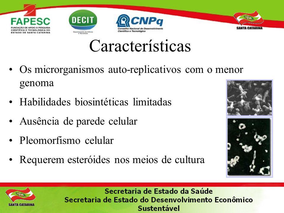 PCR para M.genitalium PCR para M. penetrans PCR para M.