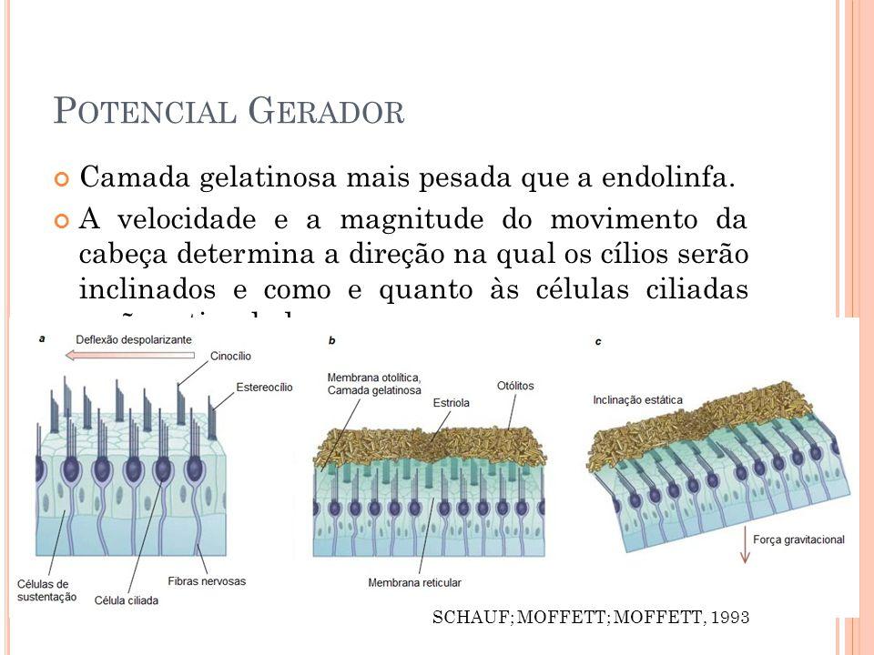 P OTENCIAL G ERADOR Camada gelatinosa mais pesada que a endolinfa.