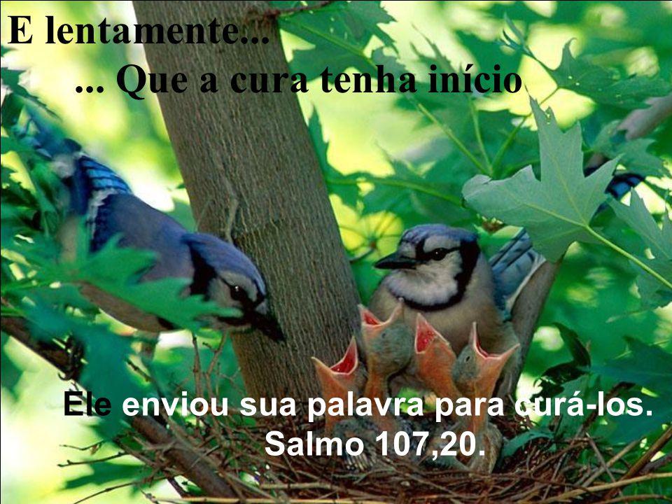 Quando não há palavras para amenizar a dor, que seu espírito seja tocado pelo amor que o cerca...