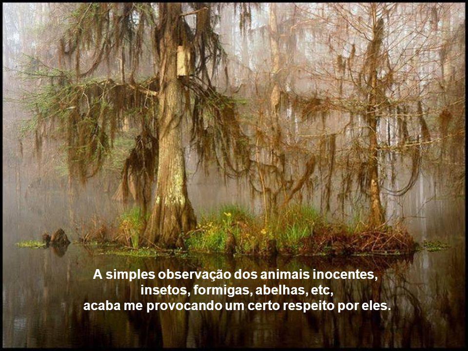 A simples observação dos animais inocentes, insetos, formigas, abelhas, etc, acaba me provocando um certo respeito por eles.