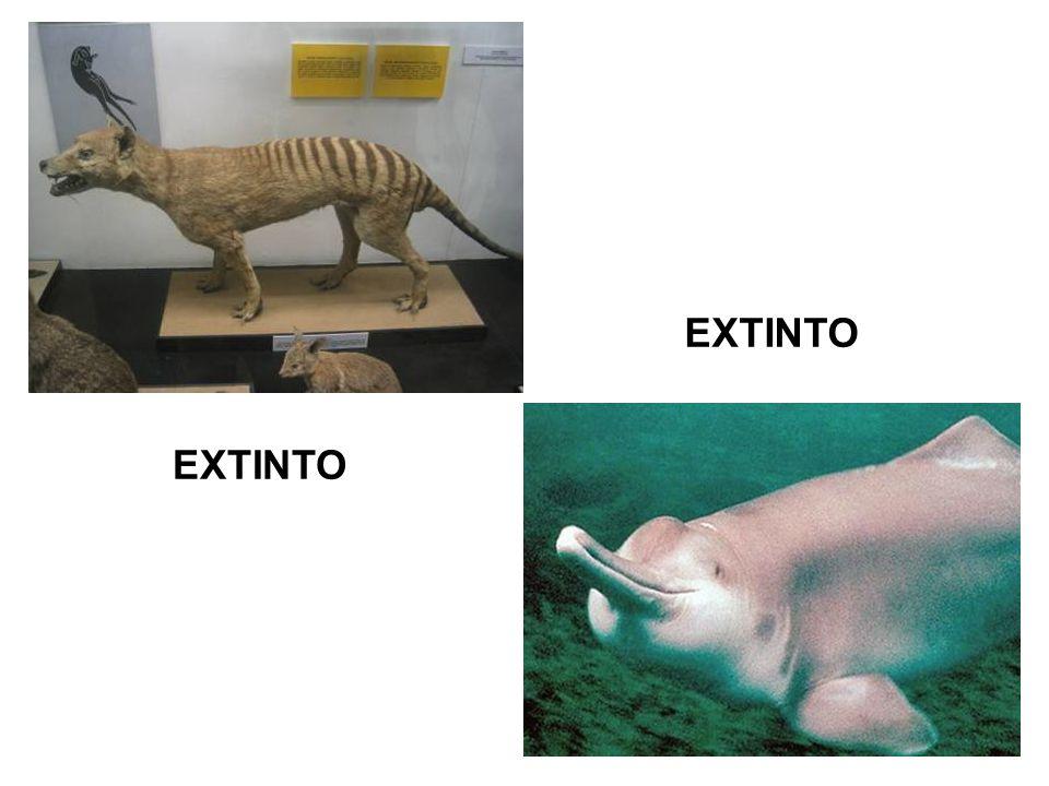 EXTINTA