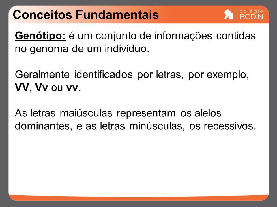 Conceitos Fundamentais Genótipo: é um conjunto de informações contidas no genoma de um indivíduo.