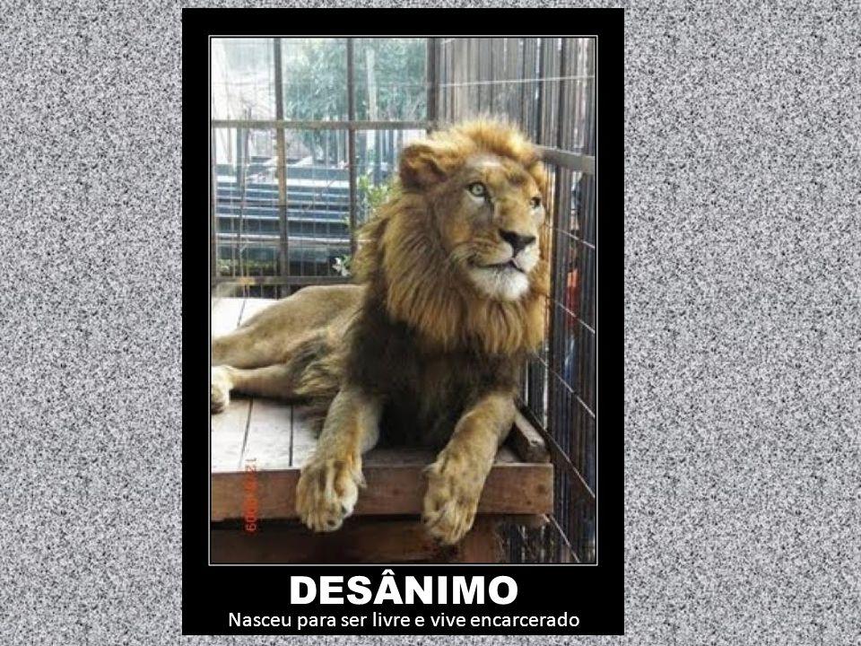DESÂNIMO Nasceu para ser livre e vive encarcerado