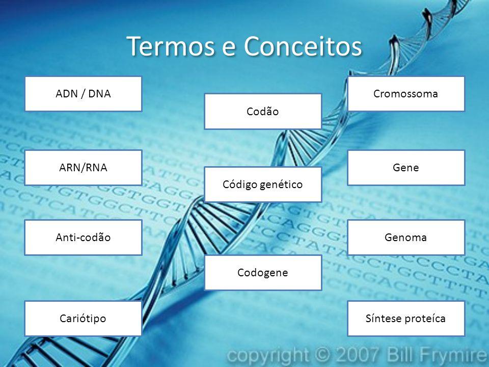Termos e Conceitos Cariótipo GeneARN/RNA ADN / DNA Síntese proteíca Cromossoma Código genético Genoma Codogene Codão Anti-codão