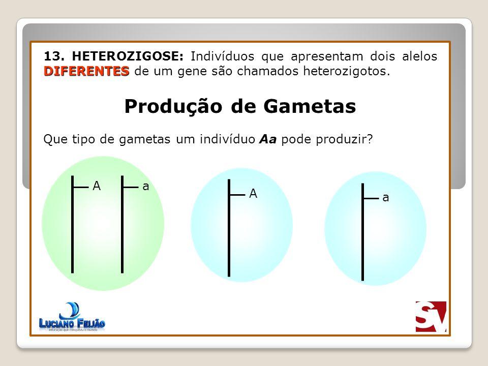DIFERENTES 13. HETEROZIGOSE: Indivíduos que apresentam dois alelos DIFERENTES de um gene são chamados heterozigotos. Produção de Gametas Aa Que tipo d