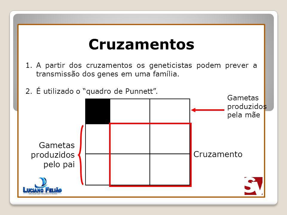 N° GAMETAS DIFERENTES 2 N Cruzamentos 1.A partir dos cruzamentos os geneticistas podem prever a transmissão dos genes em uma família. 2.É utilizado o