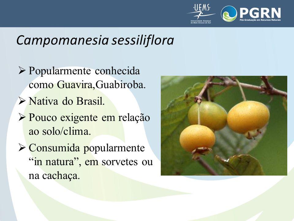 """ Popularmente conhecida como Guavira,Guabiroba.  Nativa do Brasil.  Pouco exigente em relação ao solo/clima.  Consumida popularmente """"in natura"""","""