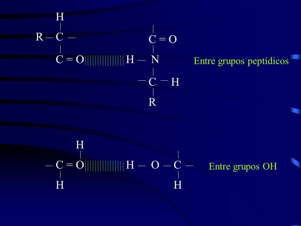 CR C = O H H HN C R Entre grupos peptídicos C = OHO H H C H Entre grupos OH