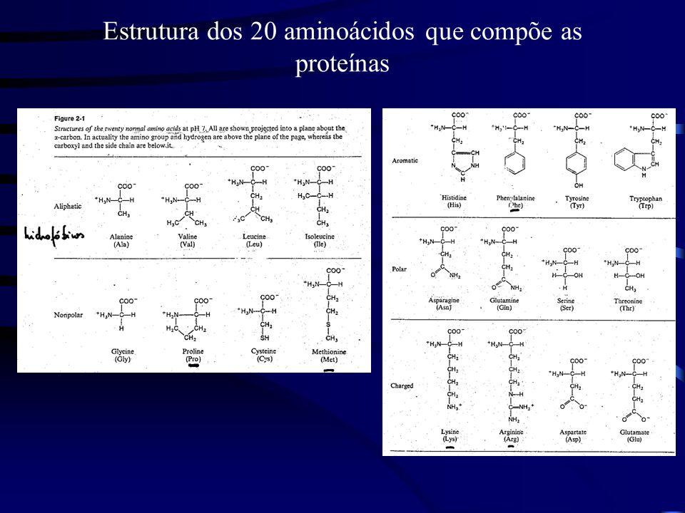 Estrutura dos 20 aminoácidos que compõe as proteínas