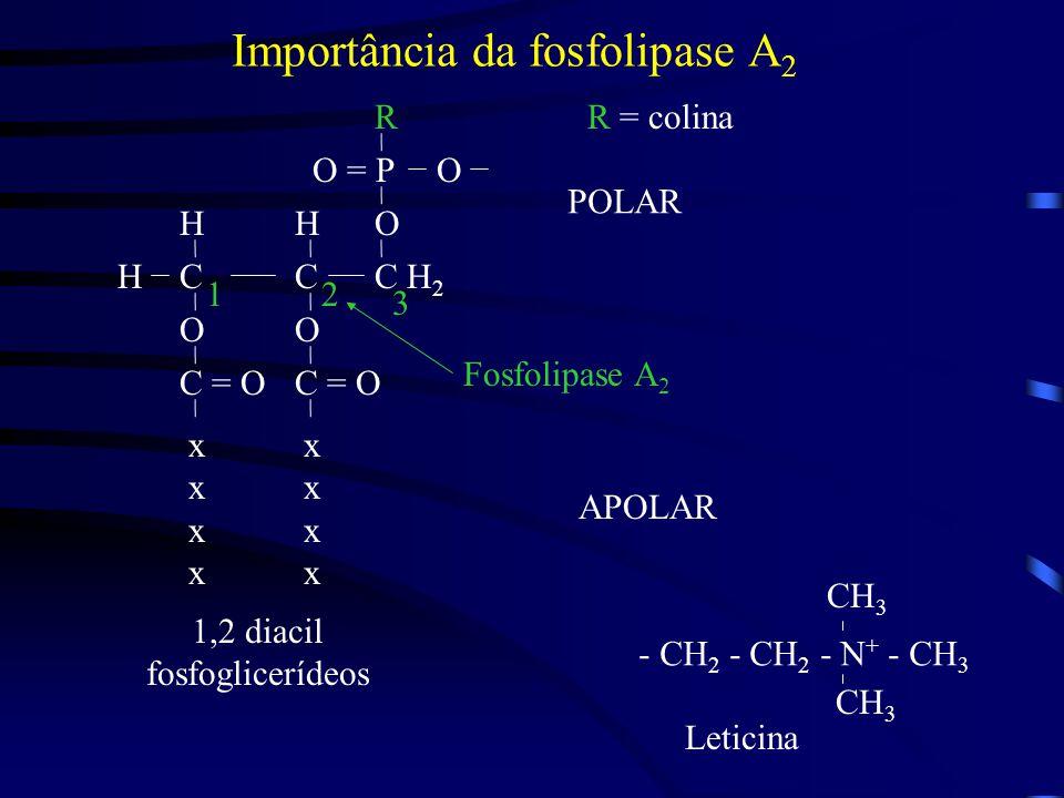 Importância da fosfolipase A 2 C O = P R O O C H 2 C O C = O O HH H xxxxxxxx xxxxxxxx 12 3 1,2 diacil fosfoglicerídeos R = colina Fosfolipase A 2 POLAR APOLAR - CH 2 - CH 2 - N + - CH 3 CH 3 Leticina