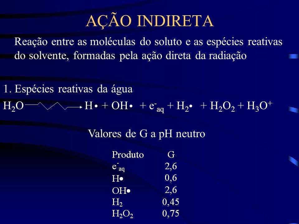 AÇÃO INDIRETA Reação entre as moléculas do soluto e as espécies reativas do solvente, formadas pela ação direta da radiação 1.