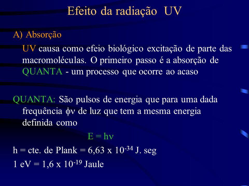 Efeito da radiação UV A) Absorção UV causa como efeio biológico excitação de parte das macromoléculas.